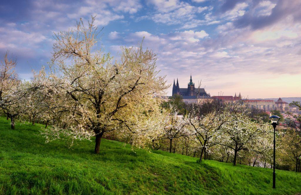 Sunny yard during spring morning at Prague, Czech republic.